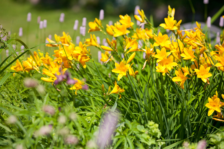 Kukkapenkki ja sen perustaminen