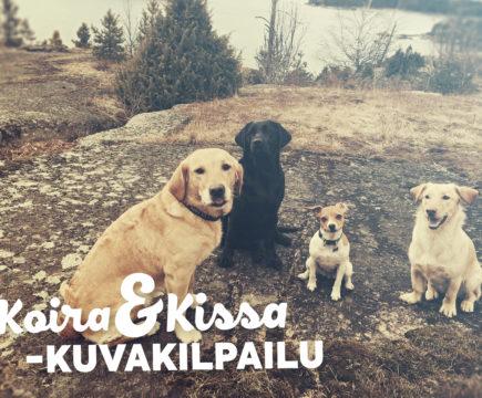 Koira&kassa kuvakilpailu